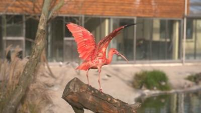 flot fugl